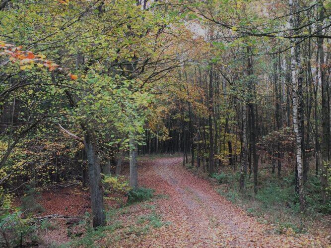 Waldweg zum Schmooksberg