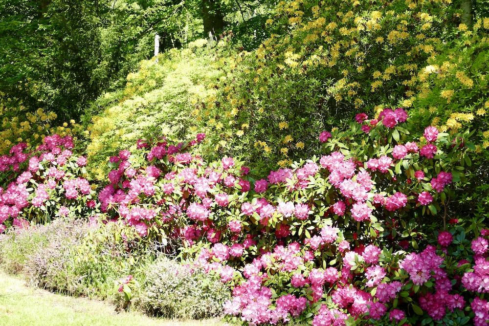 Rhododendronpark in Graal-Müritz, Mecklenburg